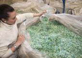 Verpackungsband-Produzent Specta kauft russischen PET-Recycler