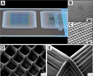 MEW-gefertigte hochporöse Zellträgerkonstrukte mit quadratischer Grundstruktur und akkurat gestapelten Strängen aus Polycaprolacton (PCL) verschiedener Durchmesser. Während das erste Konstrukt (A-C) submikrostrukturierte Fasern mit 820 nm Durchmesser und 100 µm Maschenweite hat, zeigen die anderen Aufnahmen (D und E) eine größere MEW gefertigte Struktur mit 10 µm Strängen und 200 µm Maschenweite. (Bildquelle: SKZ)