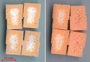 Sinterkörper aus PE-Pulver nach Behandlung im Sauerstoffniederdruckplasma (links 30 s, rechts 60 s) und Anfärbung der aktivierten Bereiche. (Bildquelle: Fraunhofer IAP)