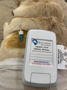 Der Mini-Infuser ist das erste tragbare Gerät zur Medikamentenverabreichung, das für kleine Haustiere entwickelt wurde. (Bildquelle: Rx Actuator)