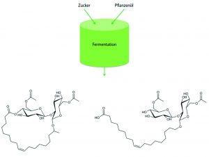 Schematische Darstellung der Herstellung von Sohorolipiden in lactonischer (links) und acidischer (rechts) Form (Bildquelle: TH Köln)