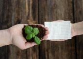 Die biologisch abbaubaren Feuchtigkeitsabsorptionskissen fangen Flüssigkeiten auf, die von frischen Lebensmitteln abgesondert werden. Sie haben den Vorteil, dass ihr Recycling-Prozess Kompost erzeugt. (Bildquelle: Bio-Fed)
