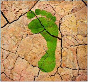 Der Carbon Footprint von Produkten wird immer wichtiger. Um Greenwashing-Vorwürfen entgegen zu wirken, ist ein fundiertes Berechnen nach den relevanten Standards ISO 14040/44 und ISO 14067 erforderlich. (Bildquelle: SKZ)