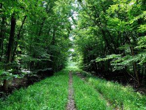 Pflege und Reinigung der Wälder sowie das Pflanzen von 5.000 Bäumen stehen im Waldbewirtschaftungsplan. (Bildquelle: Asahi Kasei_Miko)