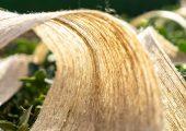 Naturfasern können synthetische Fasern in Compositen erstetzen. (Bild: BPREG Composites)
