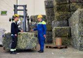 Bevor Kunststoffabfälle zu Pyrolyseöl verarbeitet werden, werden sie geschreddert, wie hier im Rahmen des Chemcycling-Projekts in einer Anlage in Dänemark. (Bild: BASF)