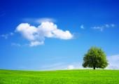 Biobasierte Einkaufstüten sind ökologischer
