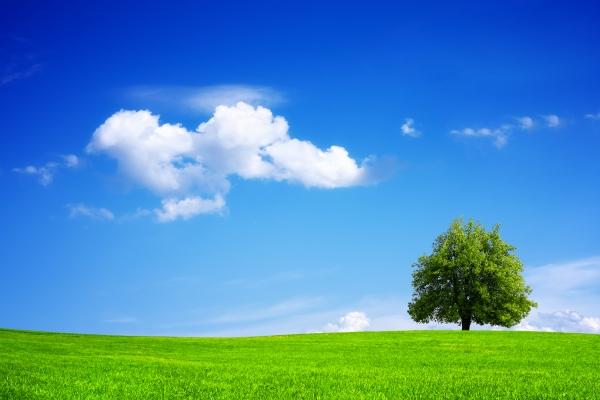 Hinsichtlich Rohstoff- und Energieverbrauch sowie Emissionen sind biobasierte Tüten ökoligischer als die aus PE. Beim Flächenverbrauch schneiden Tragetaschen aus PE besser ab. (Bildquelle: Wajan – Fotolia.com)