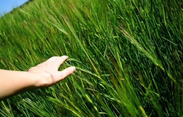 RKW hat den Geschäftsbetrieb von Biofol Film übernommen. Das Unternehmen baut mit der Akquisition des Tochterunternehmens der WKI-Gruppe ihr Portfolio an Folien für den Agrar- und Bausektor aus. (Bildquelle: Doreen_Salcher – Fotolia.com)